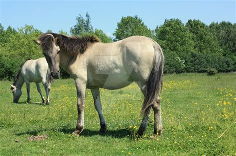 extinct horse horses tarpan breeds interesting facts species european years source florence
