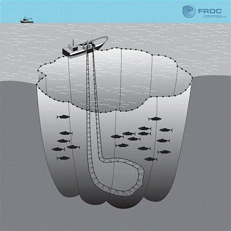 le catture accidentali che devastano gli ecosistemi marini