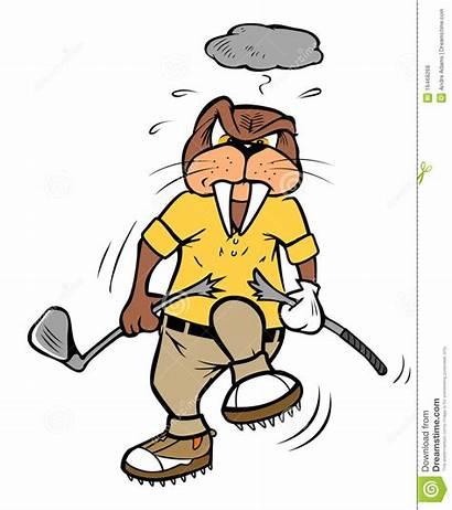 Golf Breaking Walrus Morse Cassant Av Cartoon