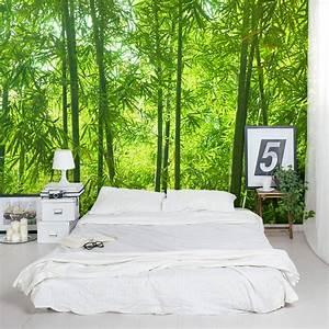 Bamboo Wall Mural Forest Wallpaper Mural Wallums