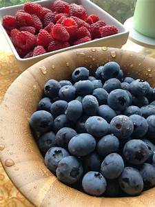 Sunset Valley Organics/ Wilt Farms Organic Blueberries ...