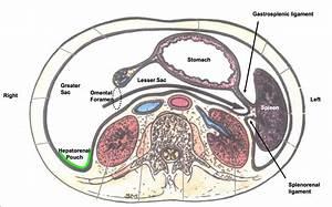 Peritoneum  U0026 Major Abdominal Vessels