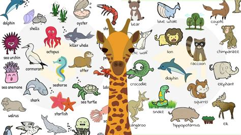 Animal Names: Types of Animals in English with Useful List