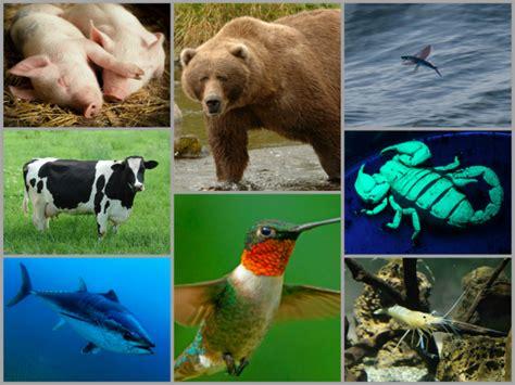 pequenas curiosidades sobre el reino animal  seguro