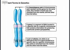 34 Which Diagram Shows A Homologous Chromosome Pair That