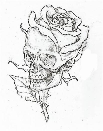 Simple Roses Drawing Rose Easy Drawings Coloring