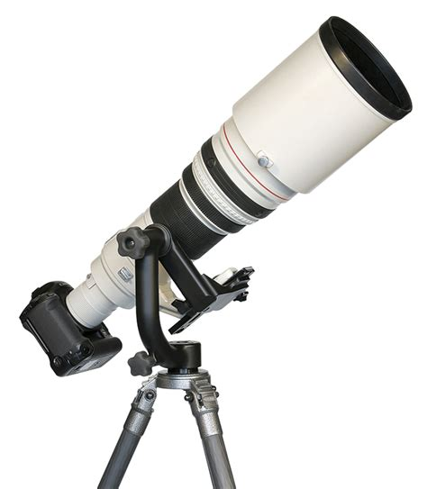bird photography guide