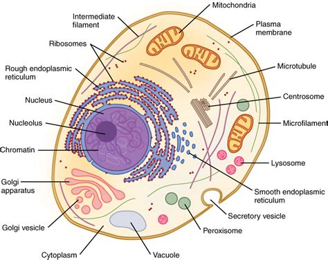 Diagram Part Of A Cell by Set 27 General Science Biology Ten Gk