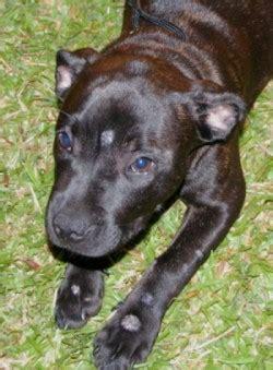 animal behavior assistance nevada humane society