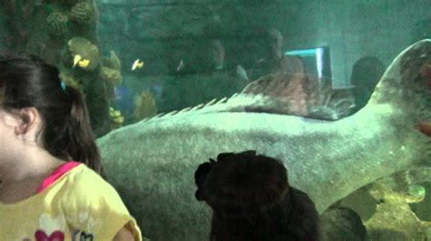 grouper aquarium goliath florida