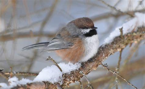provincial cuisine observer les oiseaux en hiver un défi parcs
