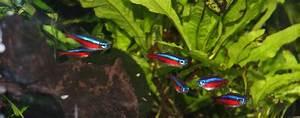 Fische Für Anfänger : aquarium fische 24 rund um fische aquaristik und angeln ~ Orissabook.com Haus und Dekorationen