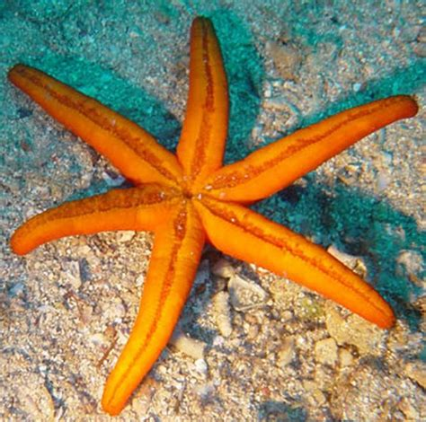 etoile de mer deco histoire inspirante etoile de mer