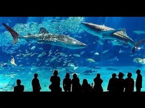 adresse aquarium grau du roi seaquarium grau du roi 2015