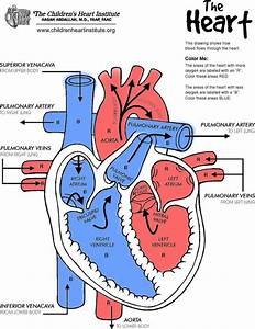 What Chamber Receives Blood From The Right Atrium