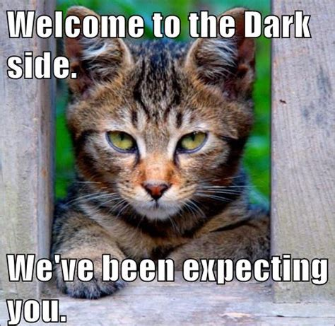 dark side messages general funny cats
