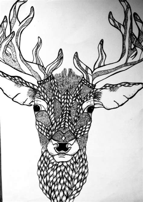 drawing animals  tumblr