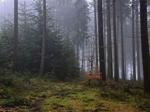 Keilrahmen Kaufen Baumarkt : artland poster leinwandbild b ume natur wiese landschaften wald foto online kaufen otto ~ Orissabook.com Haus und Dekorationen