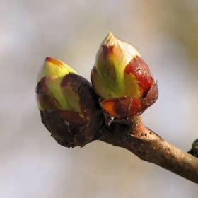 fiori di bach in menopausa chesnut bud fiori di bach in menopausa menopausa