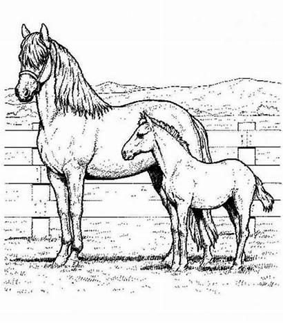 Horse Coloring Horses Pages Netart Head Arabian