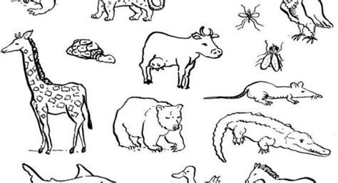 disegni da colorare animali della savana 30 ricerca disegni da colorare animali della savana