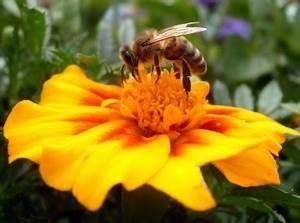 Пыльца цветочная при гипертонии
