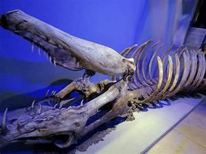 Basilisk giant serpent skeleton tec dept by Sceptre63 on ...