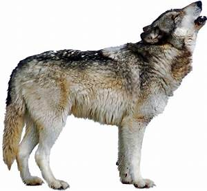 Wolf Howling   Free Images at Clker.com - vector clip art ...