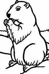 Groundhog Coloring Pages Woodchuck Printable Sheets Hog Ground Print Animal Getdrawings Rocks sketch template
