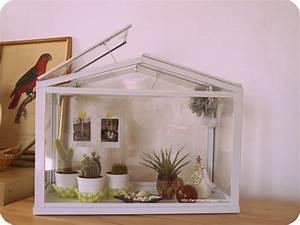 Mini Serre D Intérieur : mini serre cactus d coration pinterest diy and ~ Dailycaller-alerts.com Idées de Décoration