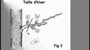 Comment Tailler Un Pommier : la taille d 39 hiver des arbres fruitiers youtube ~ Dode.kayakingforconservation.com Idées de Décoration