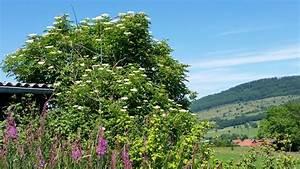 Kleiner Baum Garten : frisch kleiner baum garten ideen ~ Lizthompson.info Haus und Dekorationen