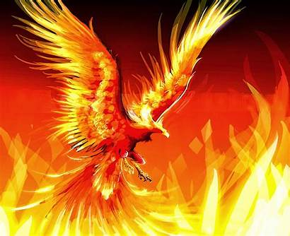 Cool Fire Wallpapers Background Awesome Phoenix Amazing