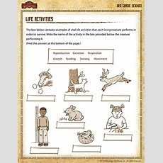 Life Activities View  Printable Science Worksheet For 3rd