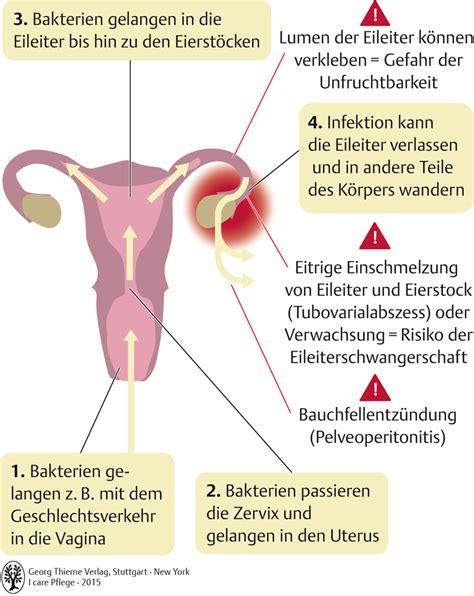 geschlechtsorgane pflegepaedagogik georg thieme verlag