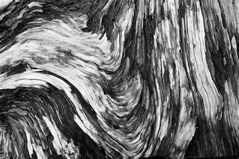 Abstract Black And White Photography Nature by Education Black And White Photography