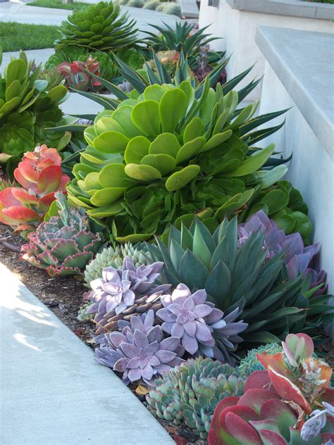 succulent landscaping grassless front yard low maintenance