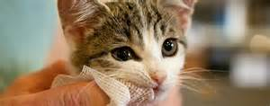 cat teeth cleaning dental care and hygiene for cats pets grooming prices