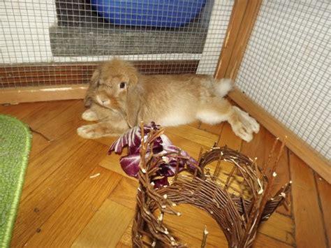 alimentazione dei conigli conigli consigli per l alimentazione