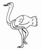 Ostrich Coloring Pages Clipart Printable Getcoloringpages Library Popular sketch template