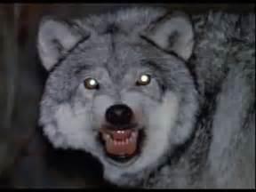 Real Life Werewolf Sightings