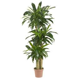57 inch corn stalk dracaena potted 6584 nearly natural