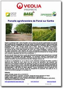 Parce Sur Sarthe : parcelle agroforesti re de parc sur sarthe a2c le site de l 39 agriculture de conservation ~ Medecine-chirurgie-esthetiques.com Avis de Voitures