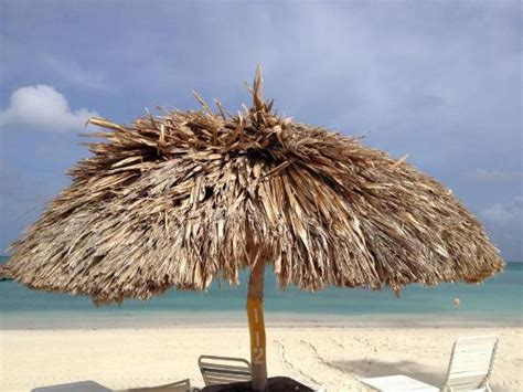 Aruba Tiki Huts by In The Pool Picture Of Marriott S Aruba Surf Club Palm