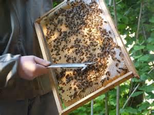la maison des abeilles la maison des abeilles ventana