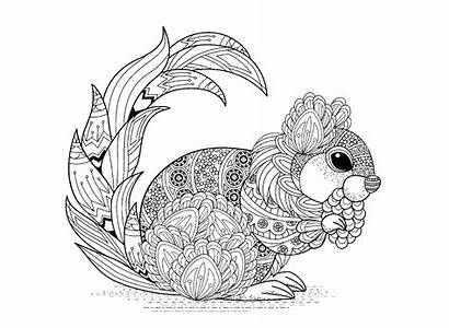 Squirrel Coloring Squirrels Patterns Pages Adult Animals