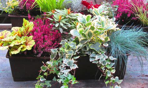 Winterharte Pflanzen Kübel by Balkonpflanzen Set F 252 R Balkonkasten 60 Cm Lang Pflanzen