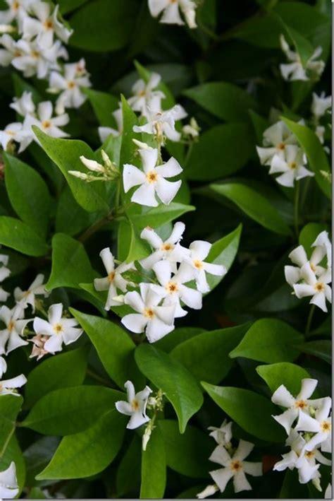 Gardenia Allergy by 5x Planten Voor De Slaapkamer Seasons