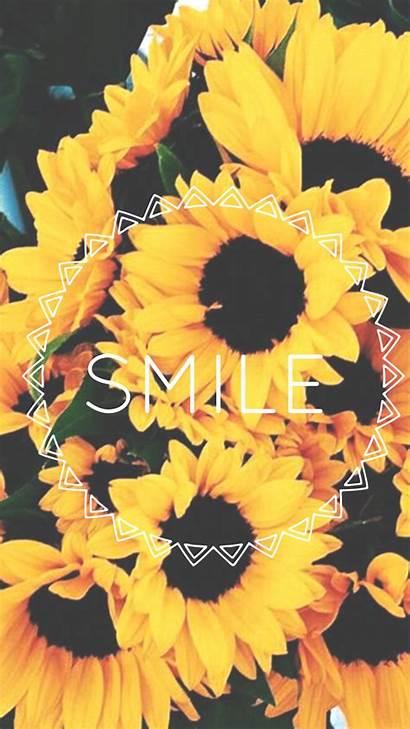 Aesthetic Wallpapers Iphone Yellow Sunflower Sunflowers Pretty