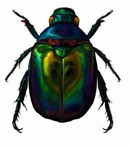 Scarab Beetle By